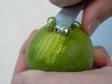 ¿Cómo extraerle la cáscara o piel a un cítrico?