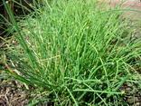 Las hierbas en cocina